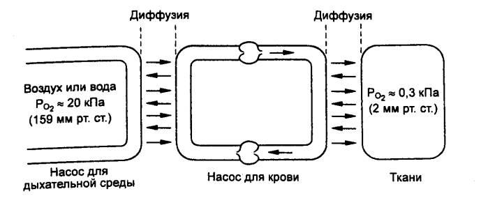 Рис. 10.23 Общая схема системы